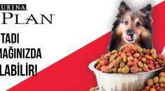 Proplan köpek maması neden çok tercih edilmektedir?